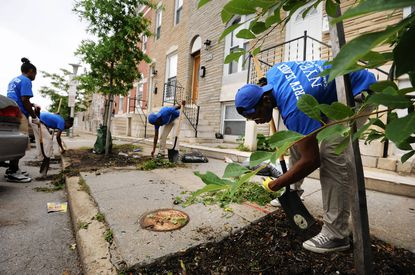 Volunteers with Baltimore Tree Trust weed and mulch trees in the 400 block of N. Luzerne Ave. From left are: Arielle Brown, 19; Kiara Carter, 21, and her sister, Kiana Carter, 18. In the foreground right is Shahem McLaurin, 19.