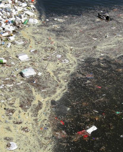 Duck paddles past a raft of trash floating in the Inner Harbor by a storm outfall in Canton