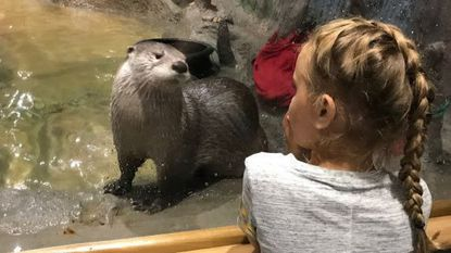 The Wally Gordon River Otter Habitat at the Delmarva Discovery Museum features otters Mac and Tuck frolicking in their 6,000-gallon aquarium and extensive land area.