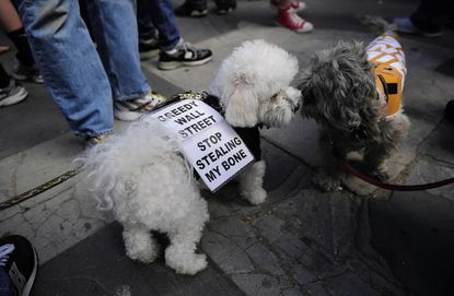 Dogs at Occupy Wall Street