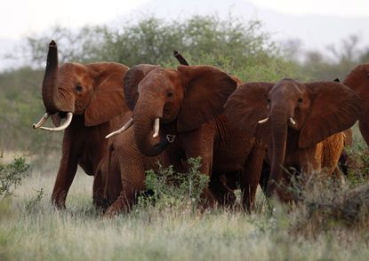 A day after the Trump administration lifted a federal ban on the importation of body parts from African elephants shot for sport, President Donald Trump tweeted that he was putting the reversal on hold for now.