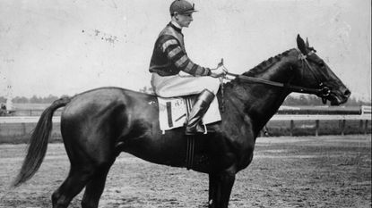 The great thoroughbred Man o' War in 1920.
