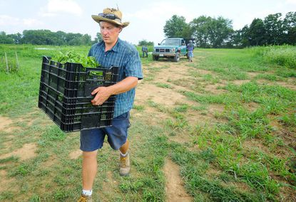 Dave Liker, of Gorman Farm, carries produce to the farm stand.