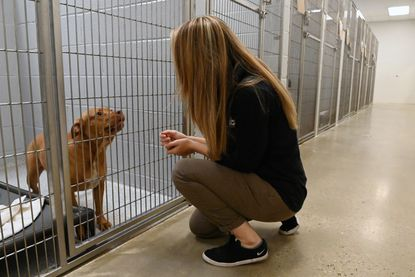 Bailey Deacon, director of community engagement for the Baltimore Animal Rescue and Care Shelter (BARCS), talks with Violet, a 6-year-old stray dog. November 22, 2020.