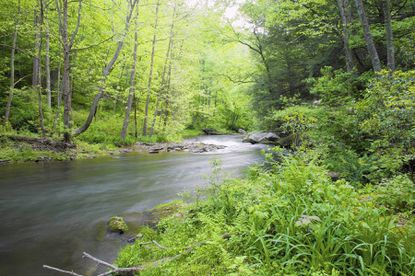 The Department of Natural Resources goes before the state Board of Public Works to request approval to buy a conservation easement on 209 acres of land in Gunpowder State Park near Sawmill Branch of Little Gunpowder Falls.