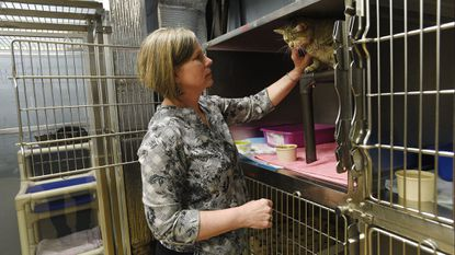 Humane Society of Carroll County kennels reopened to public after 'Black Rock Dogs' episode