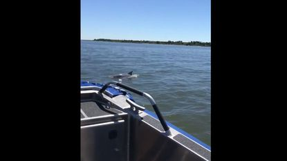 Dolphins were sighted in Baltimore County by police officers on a routine marine patrol. About a dozen dolphins were spotted in Hawk Cove at Hart-Miller Island last week.