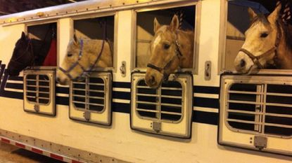 Central Carroll: Horse Fair Tack Sale coming to Agriculture Center; bingo and more bingo