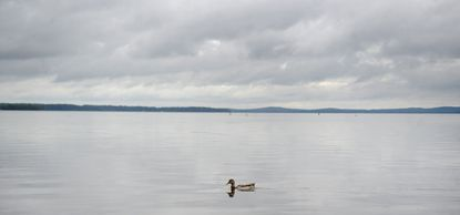 Harford County is continuing to brace for severe weather over the next several days, which could bring flooding and a possible visit from Hurricane Joaquin. Above, a solitary female mallard glides in the Chesapeake Bay off the Havre de Grace City Yacht Basin Wednesday morning following a night of heavy rain that dumped 3 to 5 inches on the area in a matter of hours.
