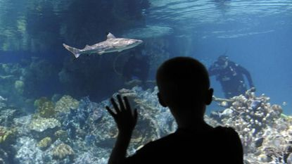 Guests can visit the National Aquarium for free after 5 p.m. Oct. 26.