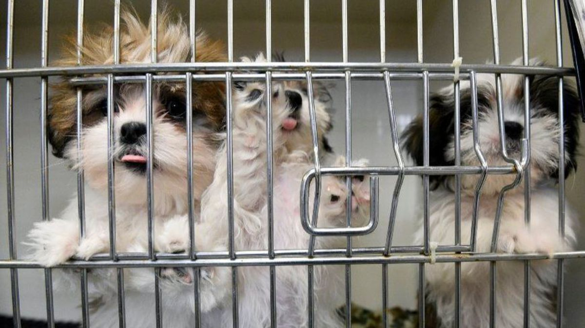Selling dogs from 'puppy mills' prohibited by bill approved