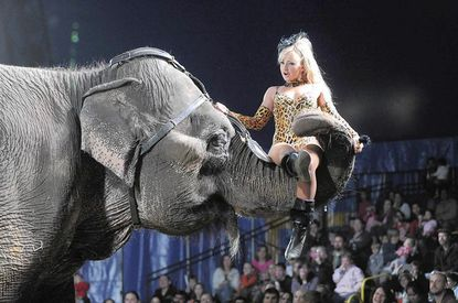 Elephant trainer Lauren Murray rides on an elephant's trunk during the performance.