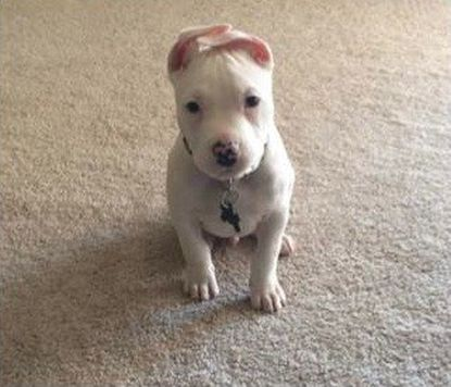 Thor, a puppy missing from his Baltimore County home, has been returned to his owners.