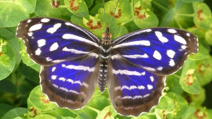 Bill May: The delight of butterflies in and around Carroll