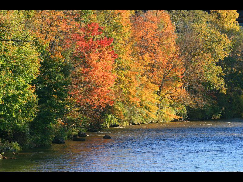 Fall Foliage Reaches High Color In Garrett County