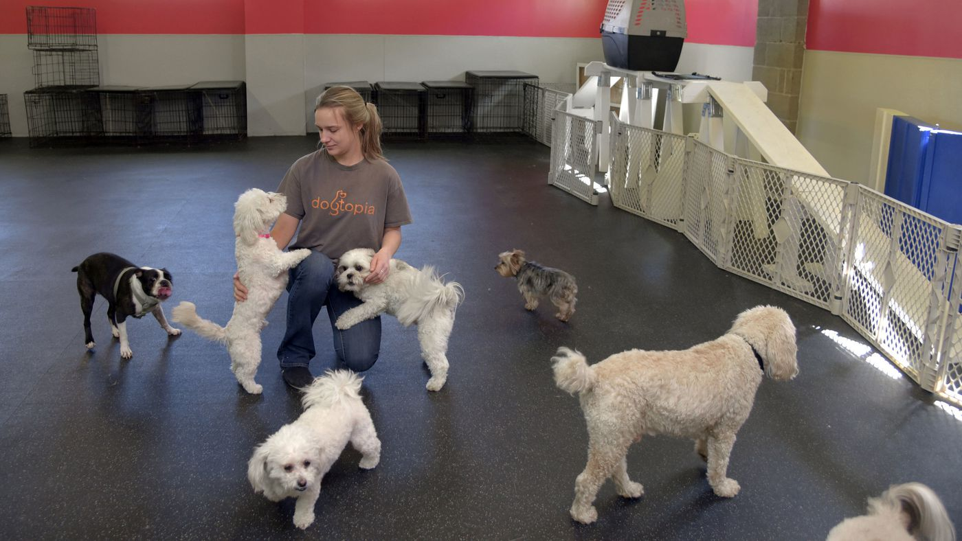 Best boarding kennel: Dogtopia of Canton - Baltimore Sun