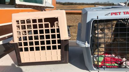 A Fells Point pilot participated in a catlift over the weekend, helping fly cats from Tangier Island.