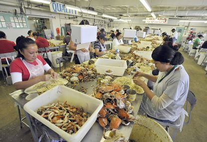 Md. crab processors battle federal wage rule