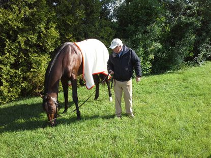 Trainer Shug McGaughey takes a turn letting Kentucky Derby champion Orb graze outside the stakes barn at Pimlico.