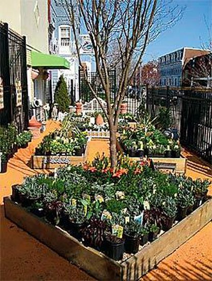 Garden District is one of the many businesses that has helped to make 14th Street a place to go in the nation's capital.
