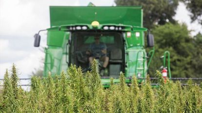 In this 2017 file photo, a Kentucky farmer harvests hemp at Murray State University's West Farm. On Wednesday, an informational meeting will be held at the Harford County Extension Office in Street to discuss the burgeoning hemp industry for local farmers.