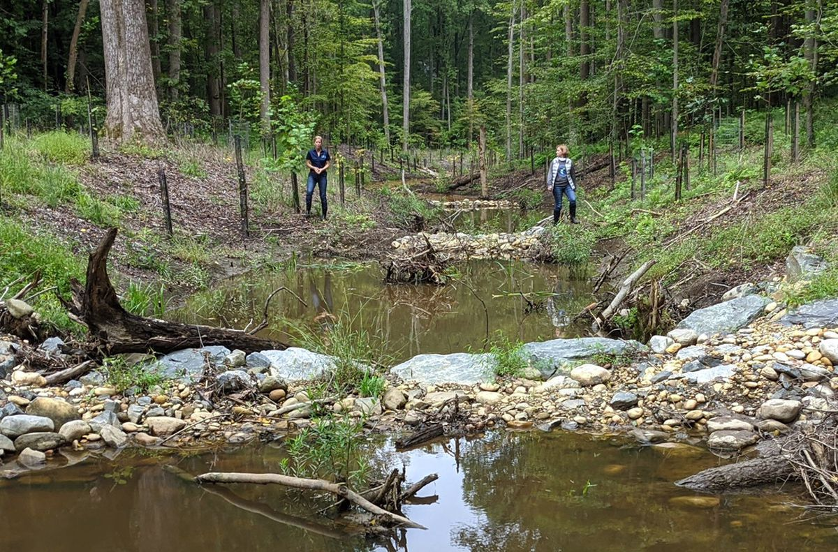 Frogs return to Gravely impaired stream in Davidsonville after restoration project