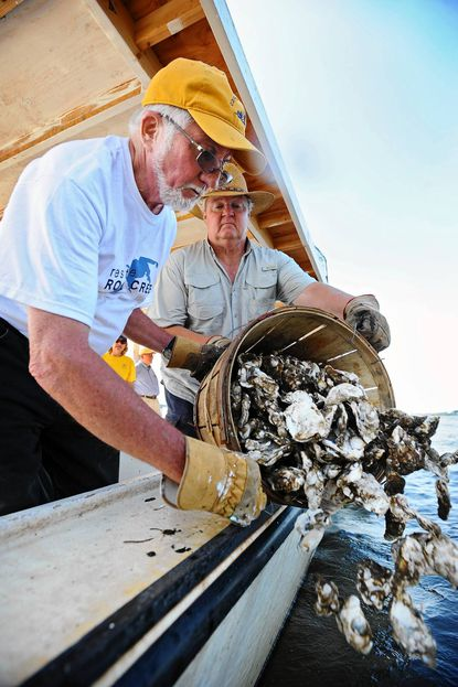 Chris Wallis, left, and Allan Straughan return juvenile oysters to an oyster bar near Fort Carroll to help clean the water of the Patapsco River.