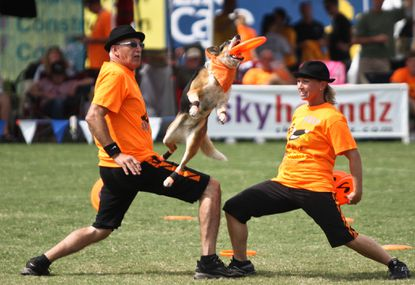 Local dogs take top prizes at World Canine Disc Championship