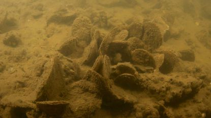 Underwater photo of oysters growing near Fort Carroll.
