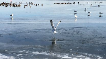 Birds gather on the frozen waters of the Chesapeake Bay in Havre de Grace. Gov. Larry Hogan has proposed legislation that would offer financial assistance for residents to upgrade their septic systems with new technology seen as key to reducing Chesapeake Bay pollution.
