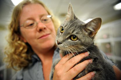Anne Arundel County Animal Control administrator Robin Small holds Chile, a female cat almost 1 year old who's been at the shelter since April and is up for adoption.
