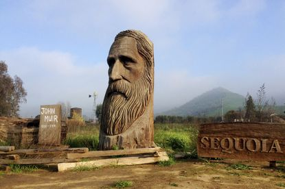 A wood-carved statue of John Muir by R.L. Blair is seen on the road leading to Sequoia National Park near the city of Woodlake, California in 2015. The Sierra Club is reckoning with the racist views of founder Muir, the naturalist who helped spawn environmentalism. The San Francisco-based environmental group said Wednesday, that Muir was part of the group's history perpetuating white supremacy.