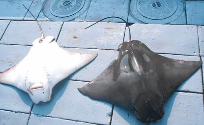 Young Marylander's ray killing petition reaches 90,000+ signatures