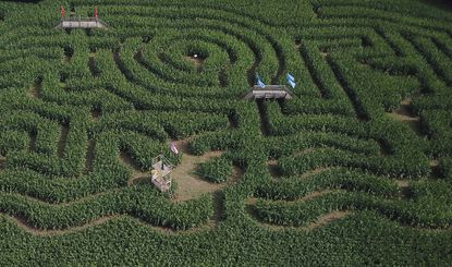 The Cornfusion corn maze at Showvaker's Quality Evergreens in Manchester opened Sept. 11 and is open every weekend through October 31.