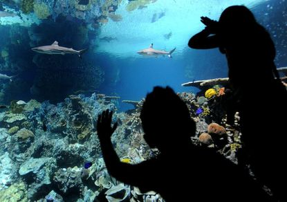 Choose your own admission price at the National Aquarium on Nov. 6.