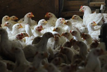 Perdue makes first report on animal welfare efforts