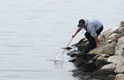 Baltimore, MD-10/15/14-Alex Pirigyi, 26, from Canton, collects grass shrimp before fishing at Canton Waterfront Park. He says the overcast sky is good for fishing. He caught perch and rockfish today. Algerina Perna/Baltimore Sun--#1711.