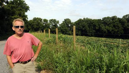 Phoenix, MD -- Stephen T. Pieper, owner of Hunter Mill Farms, stands near a field of his corn that was destroyed in a dispute with the landowner, David Smith, CEO of Sinclair Broadcast Group.