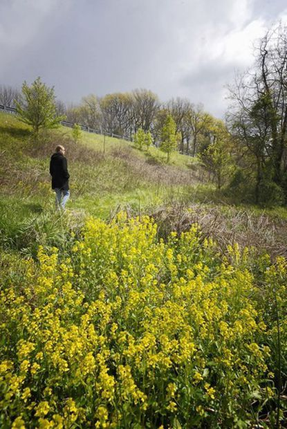 Flanked by wild mustard on her right and Route 97 up to her left, Washington Road Community Trail organizer Sylvia Supton strolls along the trail on a blustery, spring afternoon.