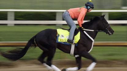 Maryland-based Win Win Win finished a disappointing ninth in the Kentucky Derby.
