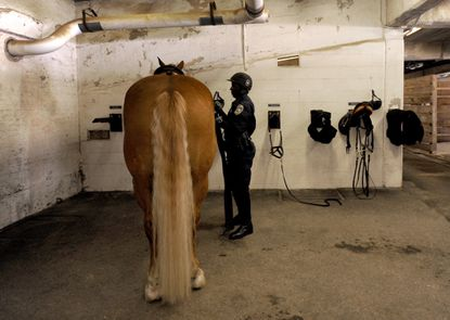 Officer Arturo Garvin removes the tack from his horse, Buster, in this 2013 photo.