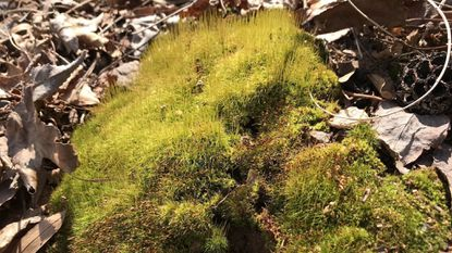 Moss likes shade and can be easier to embrace than to eradicate.